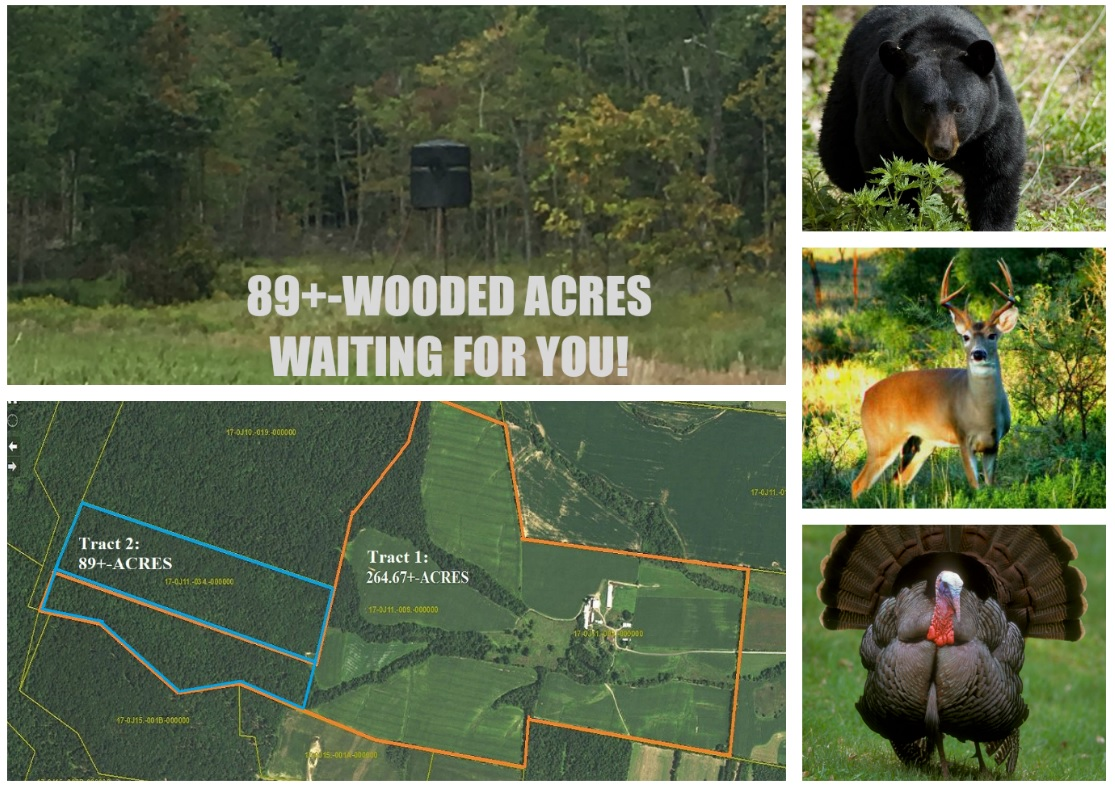 10157 CORNER ROAD-TRACT 2 (89+-WOODED ACRES)